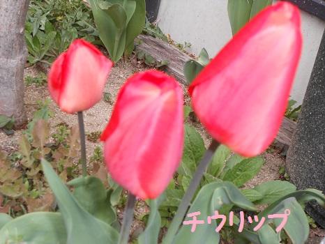 DSCN0720.jpg