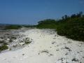喜界島の海岸