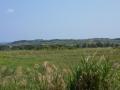喜界島の風景