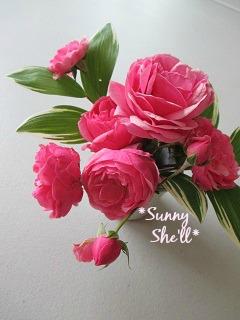 rose622014.jpg