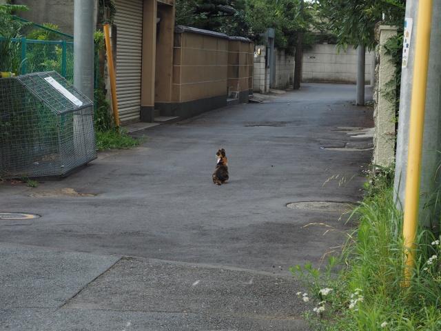猫。何やらえさをもらっているようでした。