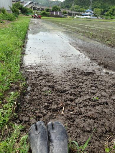 田んぼに地下足袋
