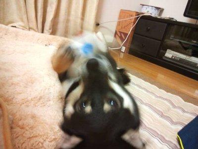 ballsuki10624.jpg