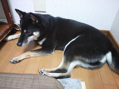 hanabiiya0915.jpg