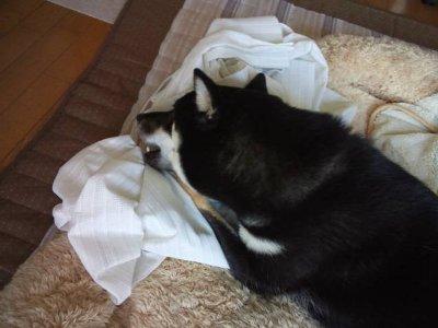 katen0608.jpg