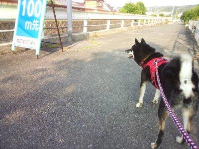 kensyou10614.jpg