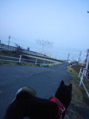 toriyama0324.jpg