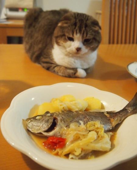 僕は魚だけで良かったにゃん