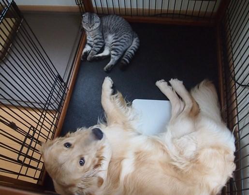 お母しゃん、僕寝られません