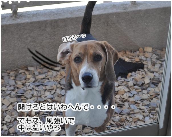 5_20140408061214c47.jpg