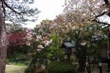 2014,4,28萬花楼お庭 039