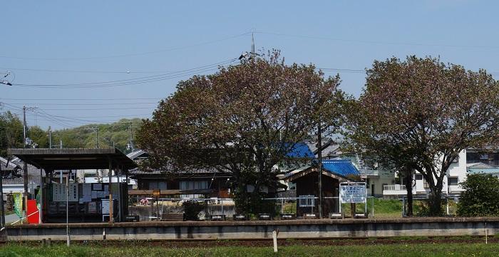 houjyoudenntetunanohana1404-001b.jpg