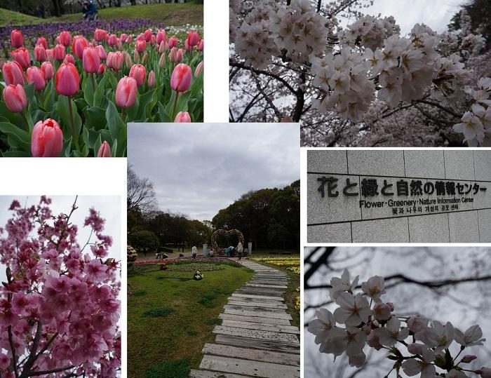 nagaikouen1404-401b.jpg