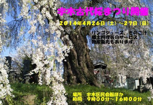 古代桜まつり告知(26.4.7)