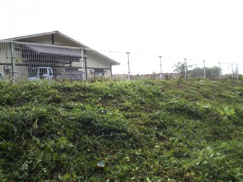 フェンスの外も草刈り(26.7.16)