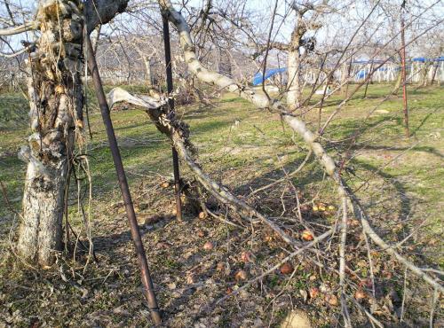 雪で折れた枝(26.4.12)