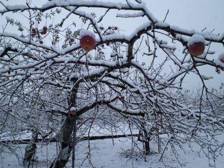 西小学校前のリンゴ畑(26.2.24)