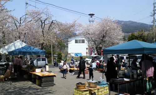 桜まつり会場(26.4.27)