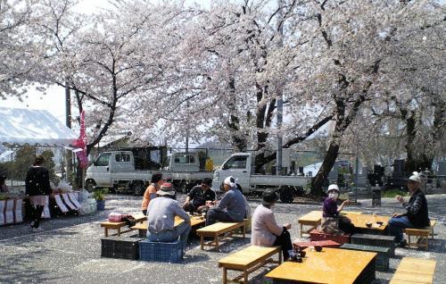 桜舞い散る(26.4.27)