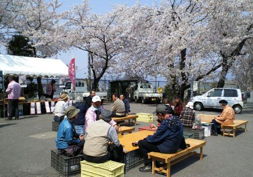 桜談義に花が咲く(26.4.26)