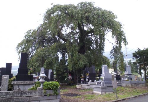 区民会館前白山の墓地(26.8.13)