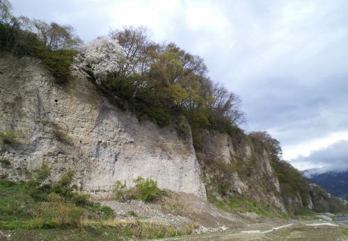 十三崖の桜(26.4.30)