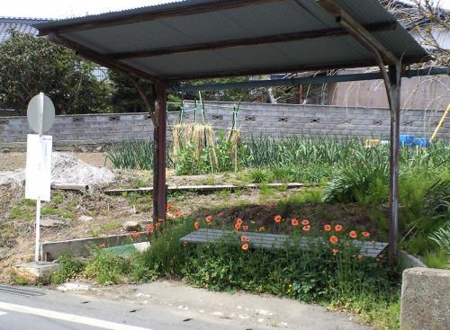 花のバス停(26.5.4)