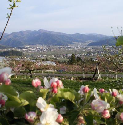 リンゴ畑から(26.5.6)