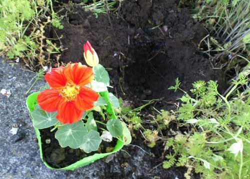 赤い花を(26.5.24)