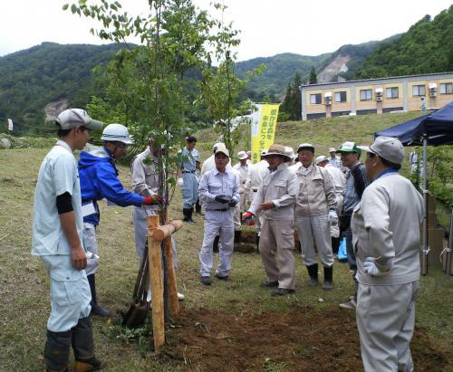 大島桜を植樹(26.6.14)