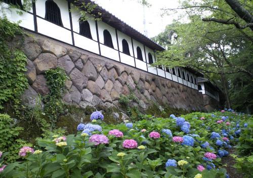 石垣と紫陽花(26.7.3)