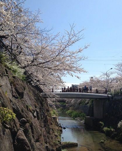 川にしたからの桜