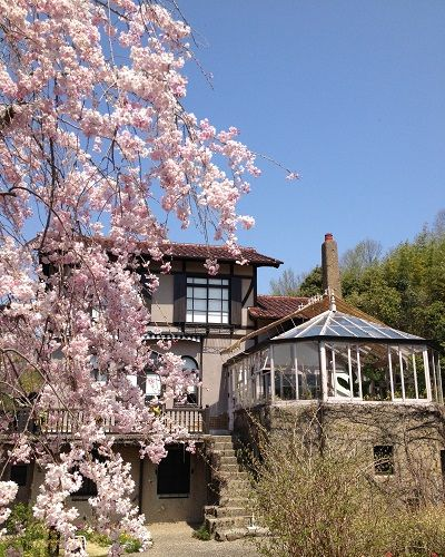しだれ桜と別荘