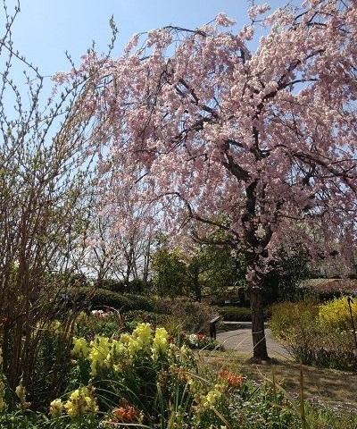 別荘の庭~