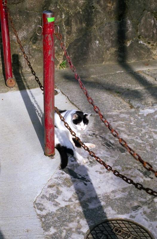 裏参道の猫たち3