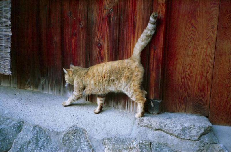 裏参道の猫