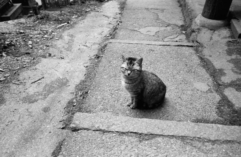 熊鷹社の野良猫1