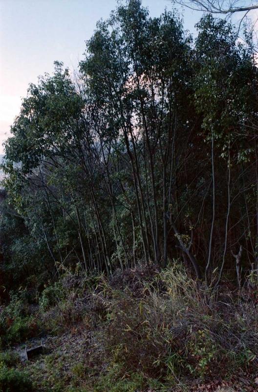 荒神峰の木立