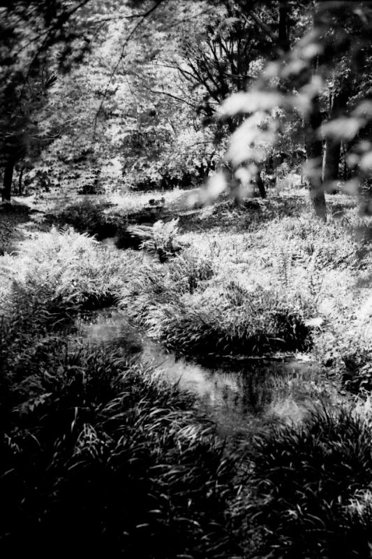 糺の森02