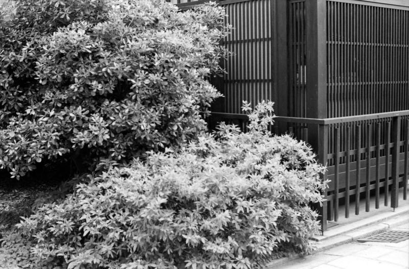祇園白川周辺4