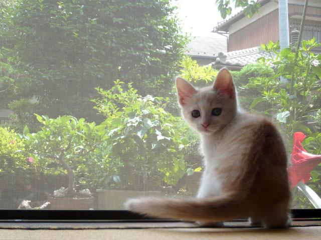 BCO 猫応募写真