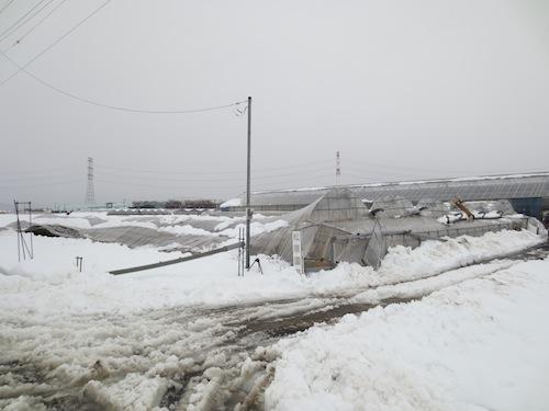 2014年 雪害 ハウス倒壊 解体 撤去 松原園芸