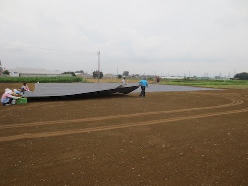 20140825 露地 石ころ畑 防草シート 張り2