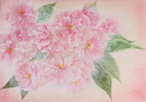 桜ハ_convert_20140417110226