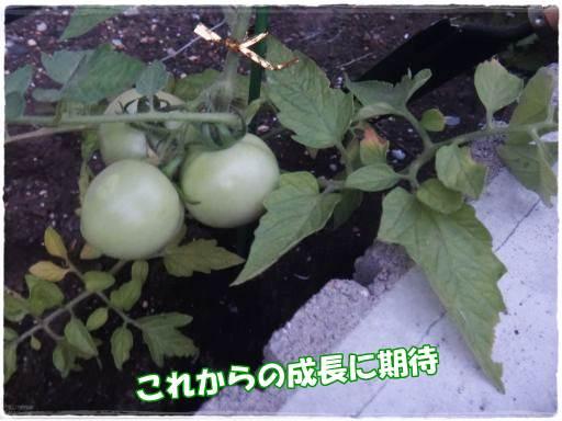 20140620-3.jpg