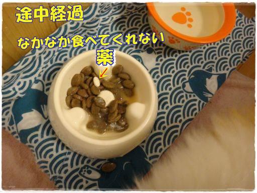 20140715-2.jpg