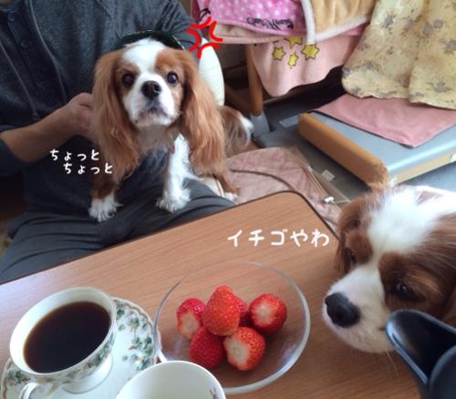 fc2blog_20140220230005cb6.jpg