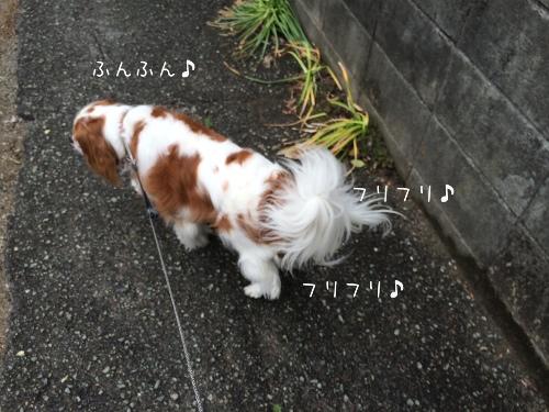 fc2blog_20140516175606e1c.jpg