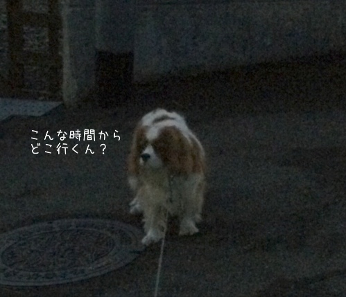 fc2blog_20140517010704a36.jpg