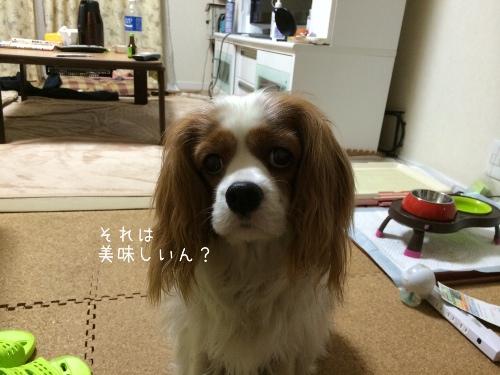 fc2blog_2014051922411242c.jpg